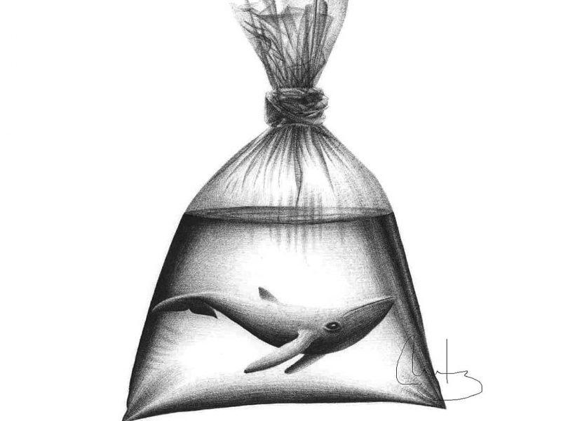 Clase de ilustración